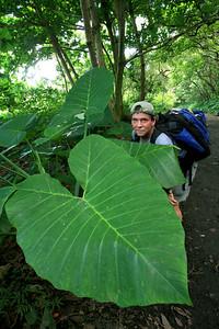 Waipio beach trail and the giant plants h0507_3554