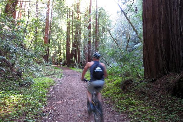 Big Basin Bike/Hike: Feb 17, 2013