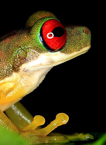 Biol 499, 2010-11: Costa Rica