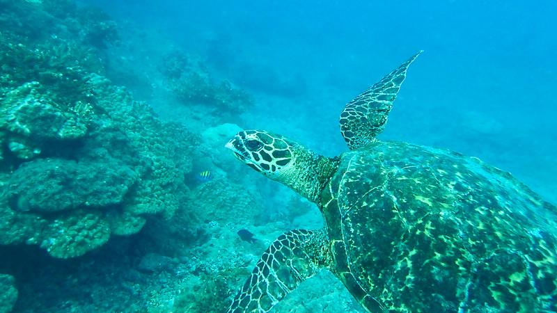 Biol 499, 2014-15: Costa Rica