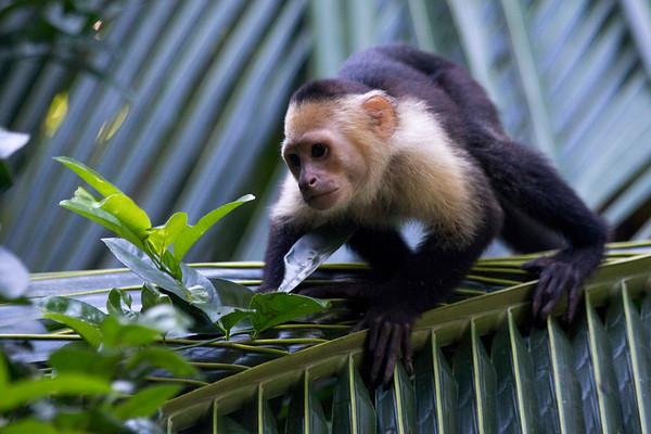 Biol 499 Costa Rica 2016-17