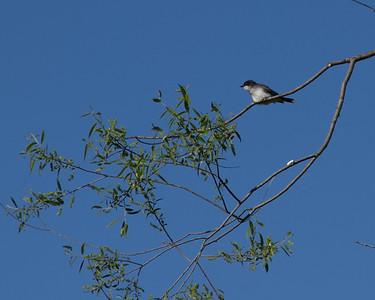 Bird Banding May