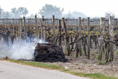 Burning straw to protect the blossoms