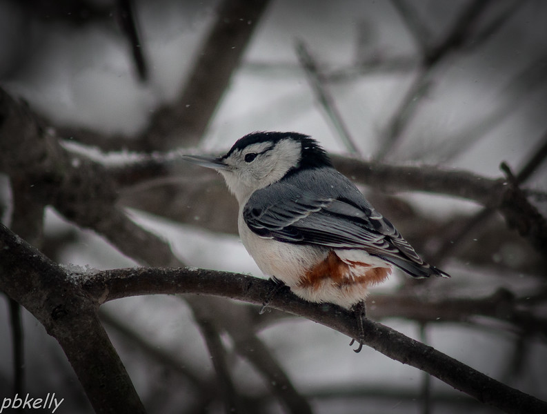 Best Nuthatch shot I have gotten so far this year.