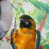 Bird Kingdom : A Tropical Adventure in Niagara Falls, ON