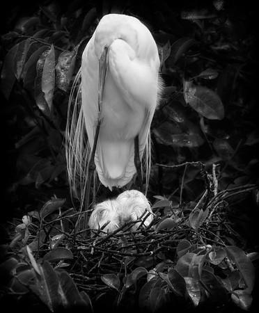Minding the Nest Come Rain or Come Shine-4836