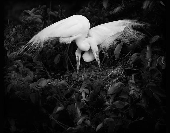 Egret Love Knot - 4422