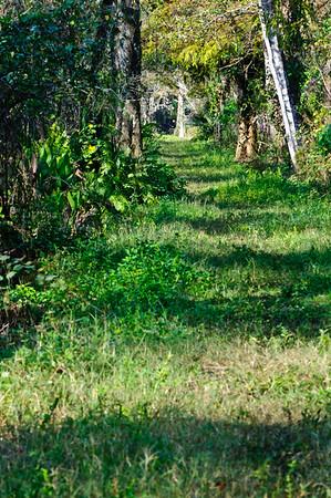Very long, straight walkways through the swamp.