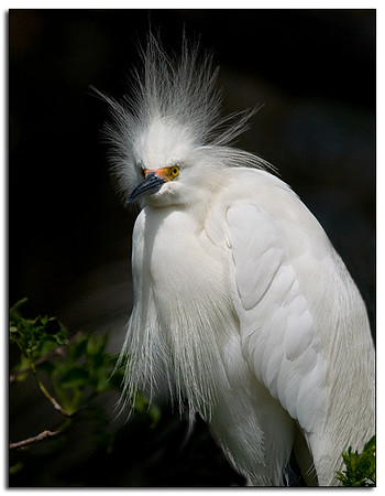 Snowy having a bad hair day