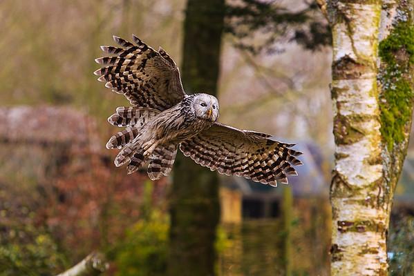 Hawk Conservancy Trust, England