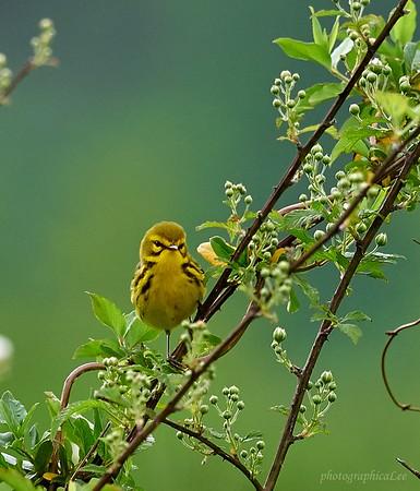 Bird walk at Freels Bend