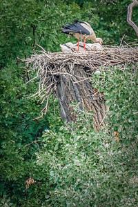 High Aerie for Storks