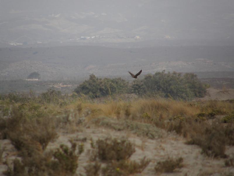 Osprey_CabodeGata_Sept2007