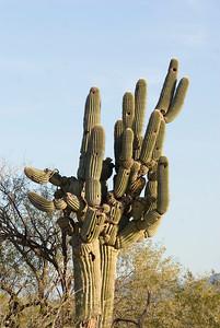 Cactus Bird Hotel