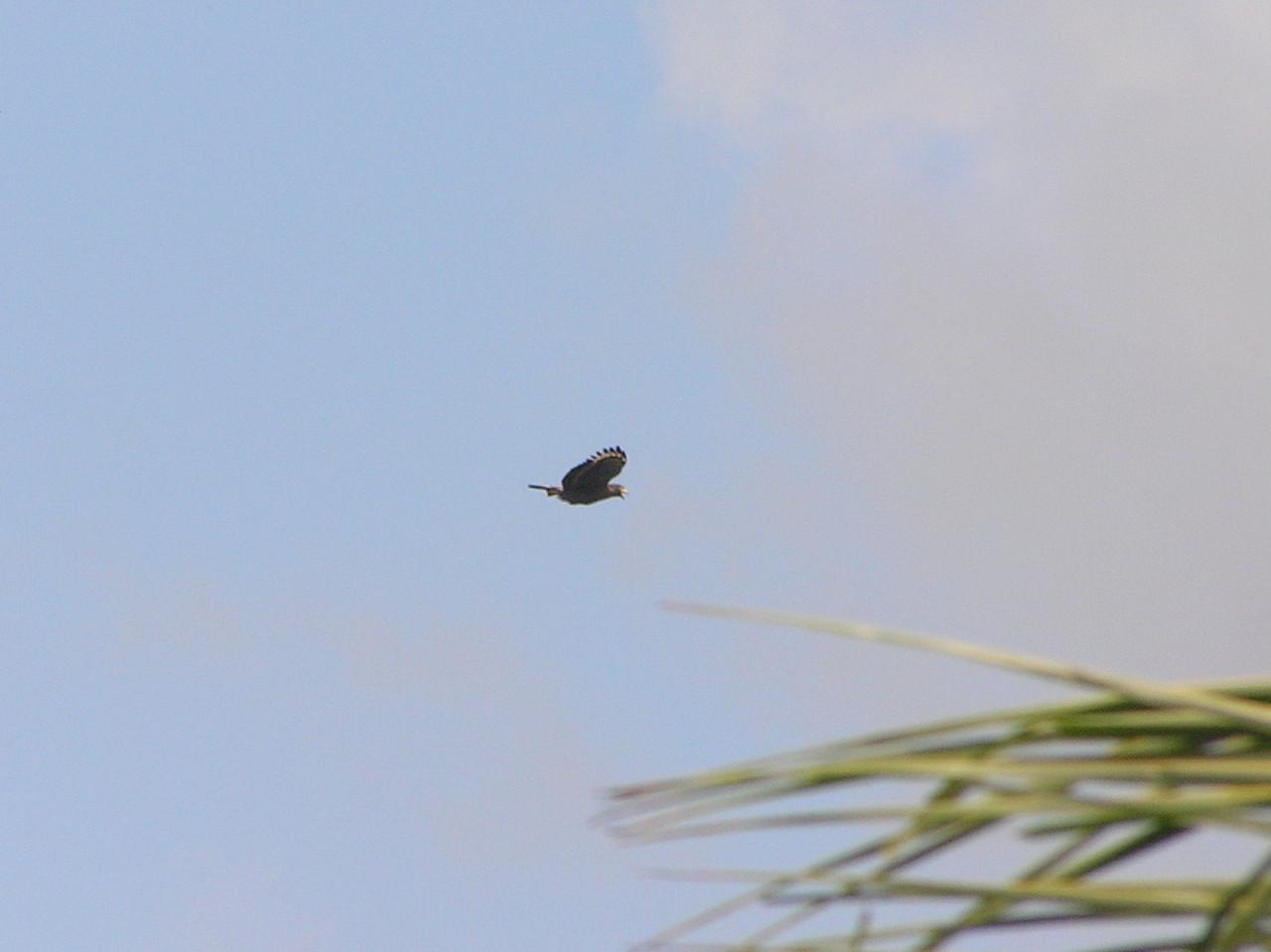 dunno eagle flight 6 bali aug 2010