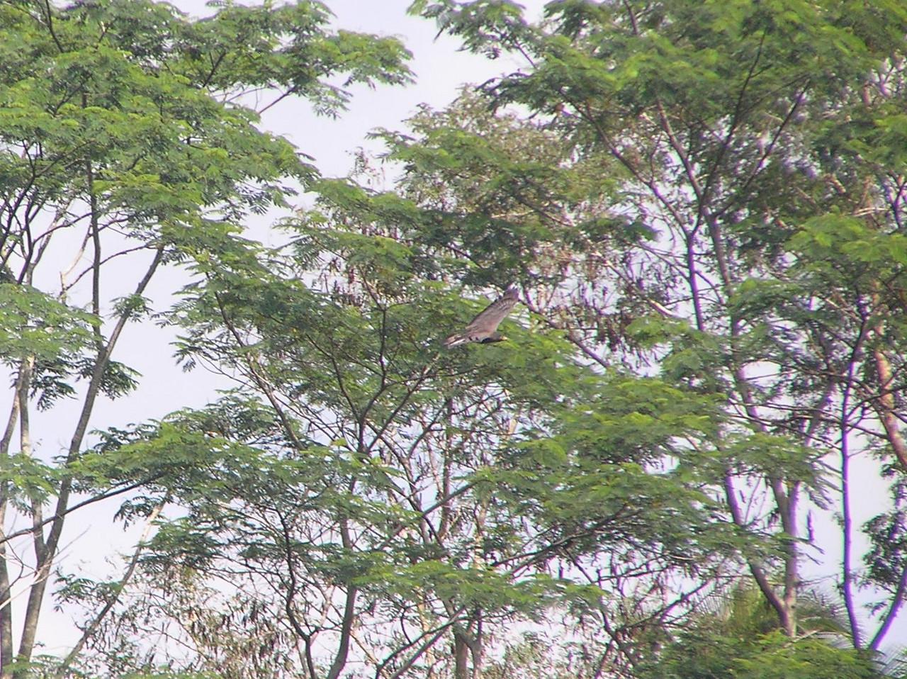 dunno eagle flight 2 bali aug 2010