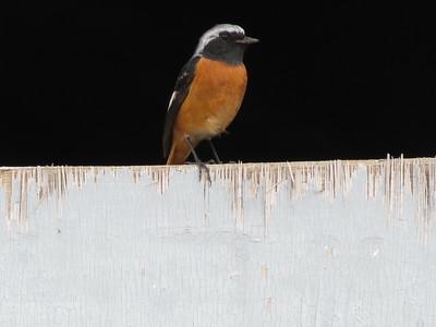 China Birding