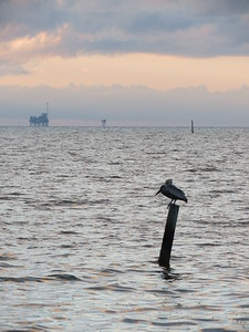 Gulfcoast Sunrise