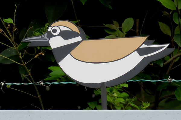 Japan Birding