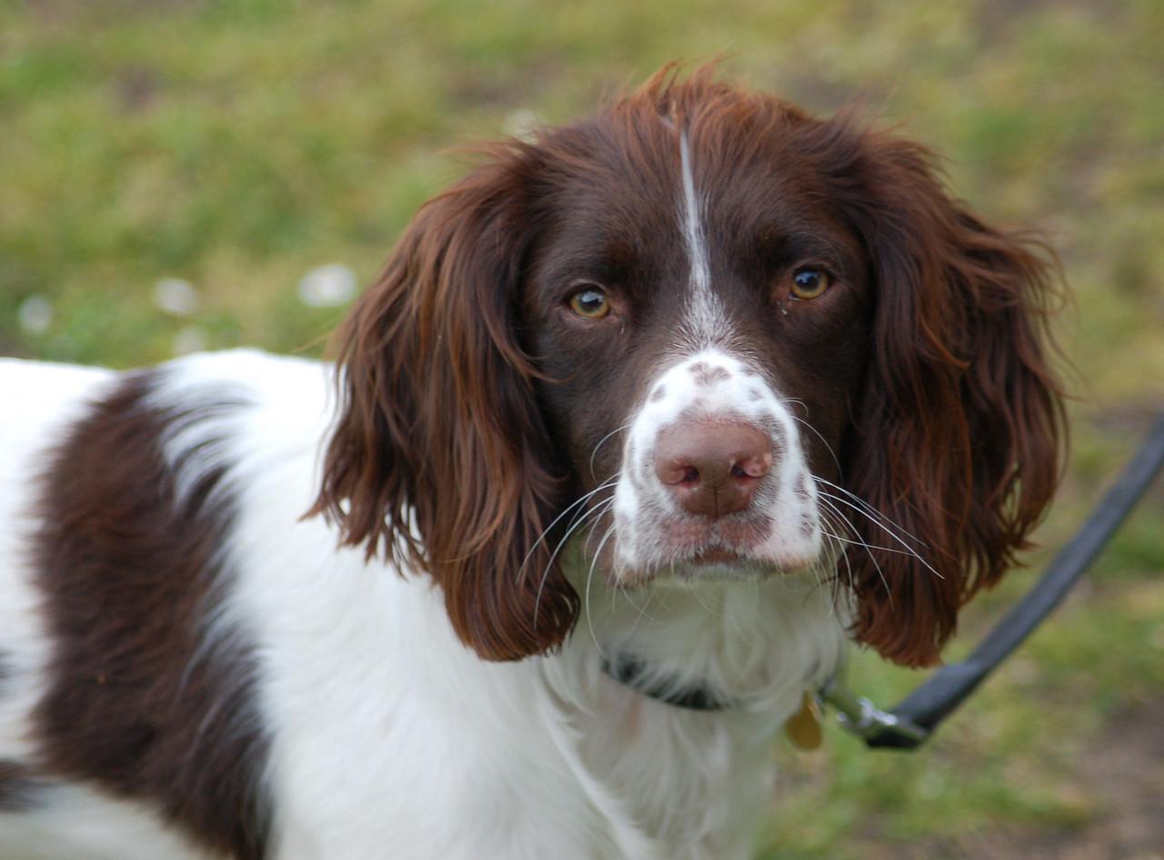 Oscar Norfolk May 2010
