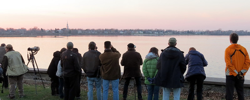 Happy crowd of onlookers observing the Ross's Gull from Fort Chambly on 11/16.