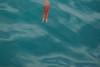 Pelagic Red Crab - Santa Cruz Island