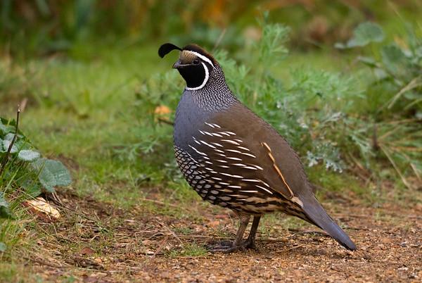 San Francisco Birding