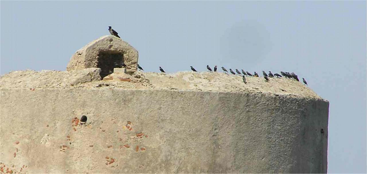 Sardinia_Starlings_Sept2006