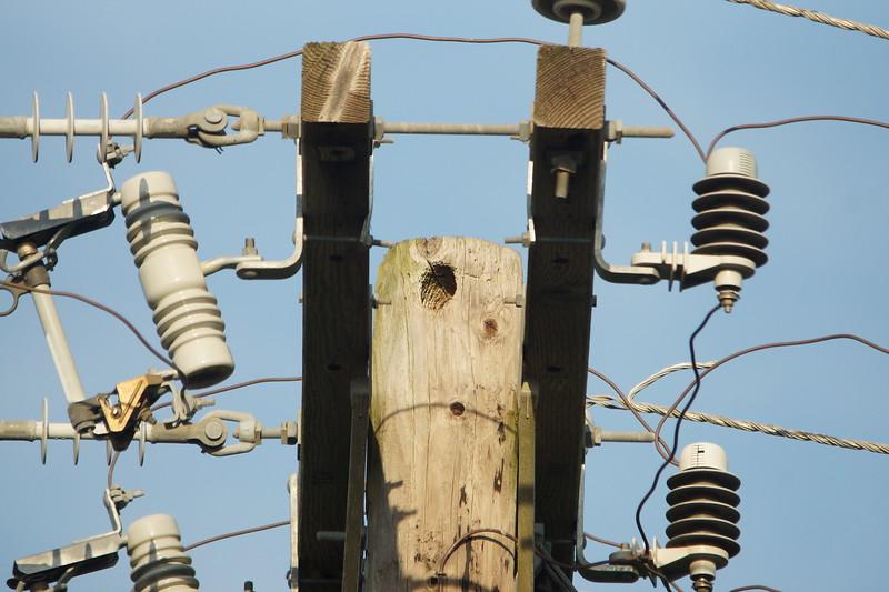 Elf Owl nest at Bentsen Rio Grande Valley SP