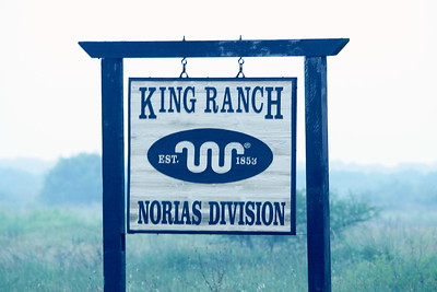 The famous King Ranch - Norias Division.... home of Ferruginous Pygmy Owls and Tropical Parulas...among others...