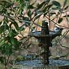 Birds at 309RR 2020