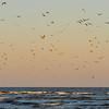 Birds of Gould's Inlet on St. Simons Island, Georgia 04-25-09