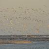Birds at Gould's Inlet 04-27-09 on St. Simons Island, Georgia