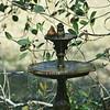 Cardinal taking a Bath at 309RR 02-28-18