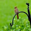 Cardinal 05-19-09