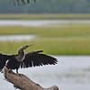 309RR Cormorant 09-20-20