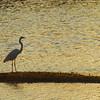 Wildlife at Ding Darling Refuge on Sanibel Island, Florida