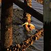 Great Blue Heron under Jekyll Wharf on Jekyll Island, Georgia at Sunset