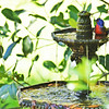 Painted Bunting taking bath in the fountain at 309RR in Brunswick, Georgia 05-03-17