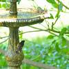 Male American Redstart 05-01-10