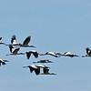 Woodstorks and Roseate Spoonbills sometimes 06-12-18