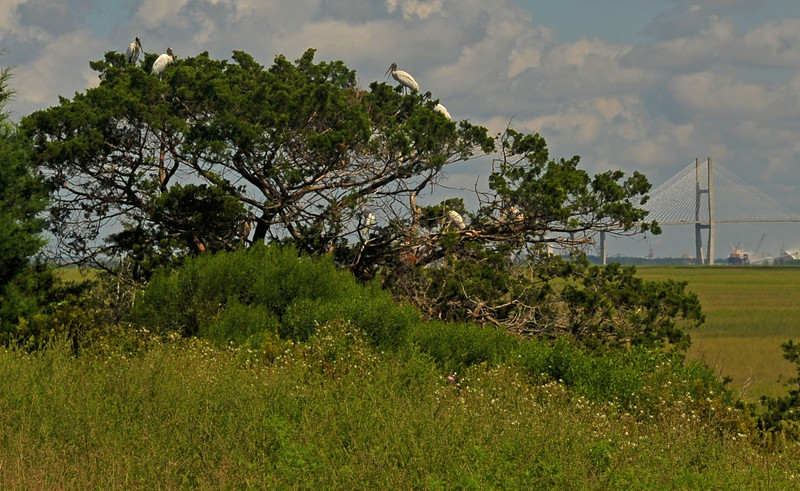 Woodstorks and Sidney Lanier Bridge 07-27-18
