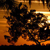 Woodstork at Sunset at River Ridge Road, Brunswick, GA