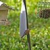 309RR Yardbirds Brunswick, Georgia 11-14-10