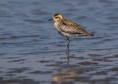 Birding Photographic Life List
