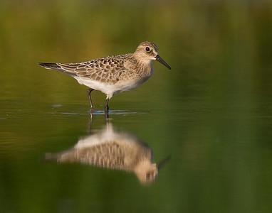 Photographic Life List - Birds of North America