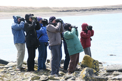 Alaska Birding Trip - June 2007