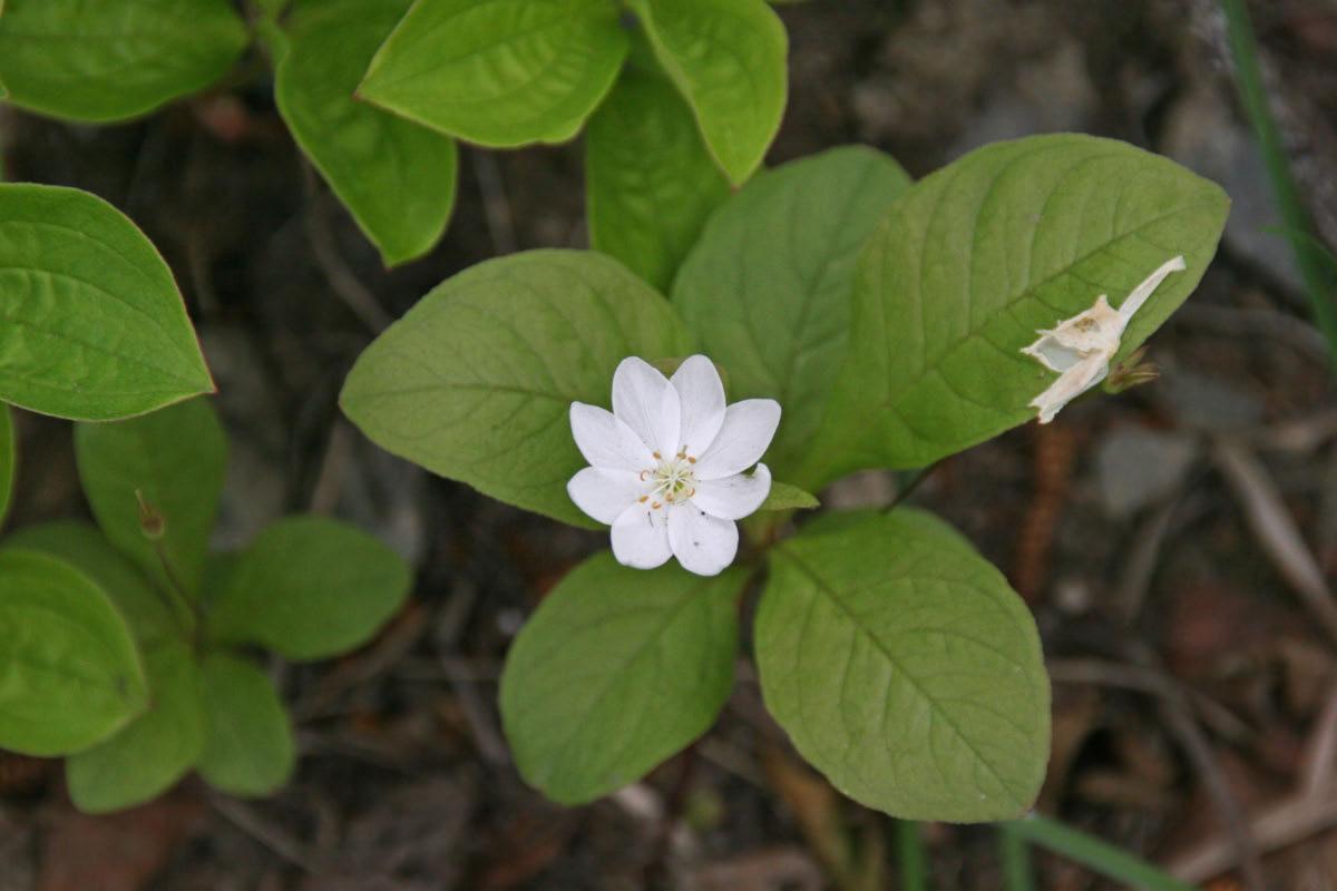 Wildflowers - Anchorage Park