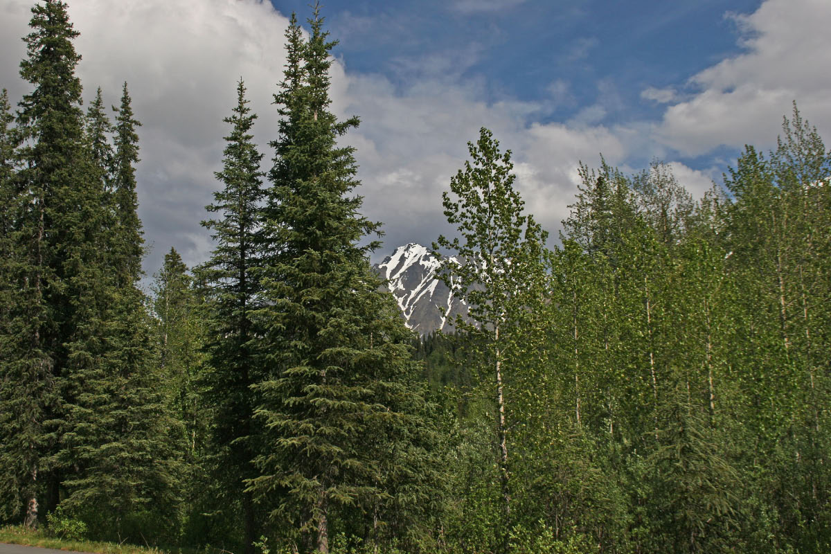 Alaska Mountain Range from Parks Hwy