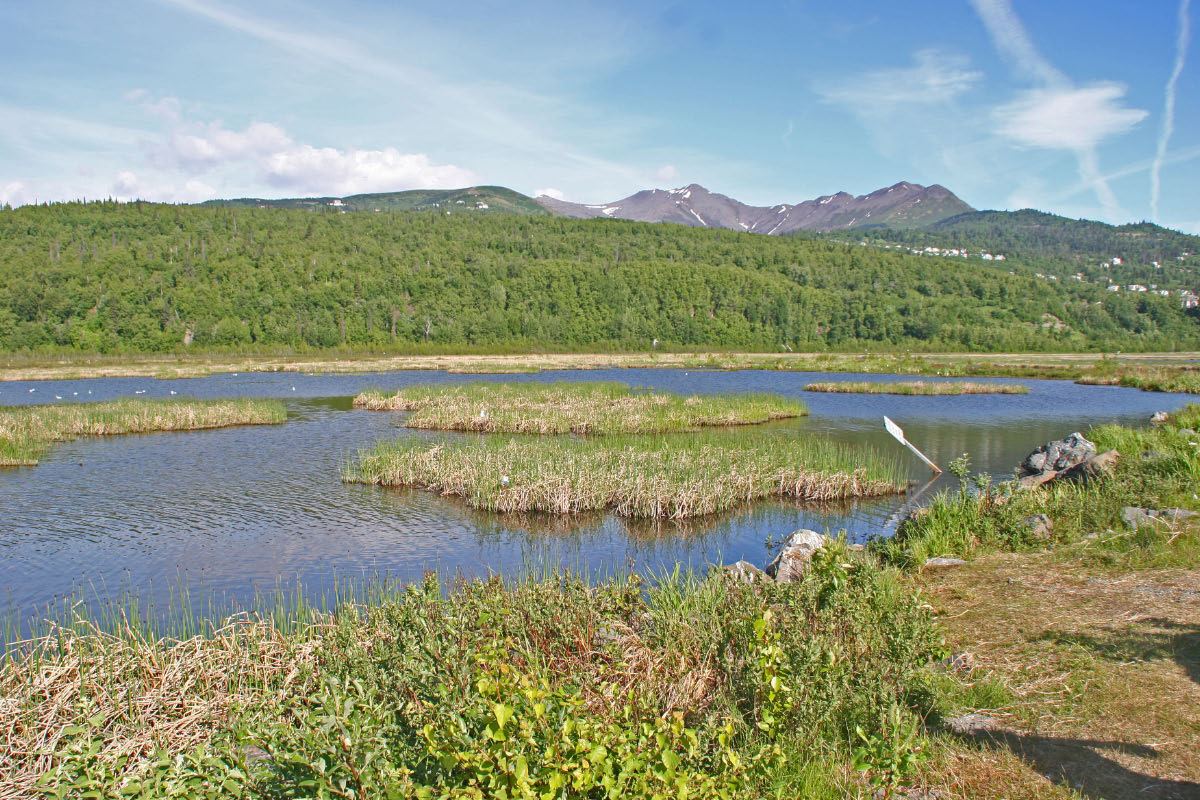 Potter's Marsh - Anchorage